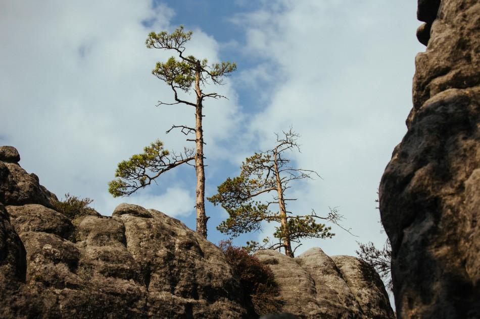 pejzaż gór stołowych, na skałach rosną drzewa