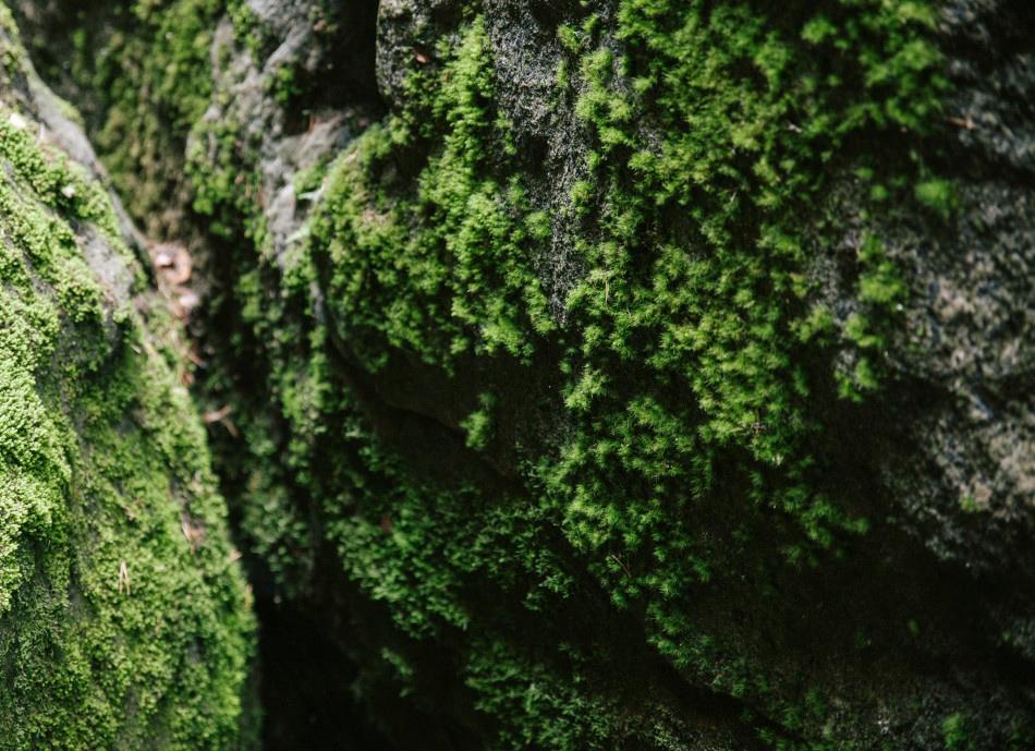 skały gór stołowych pokryte sa mchem