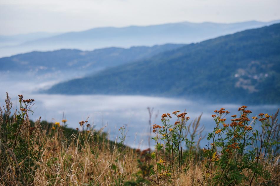 krajobraz z góry żar przedstawia widok na jezioro międzybrodzkie, pojawia sie lekka mgła, na pierwszym planie są kwiaty