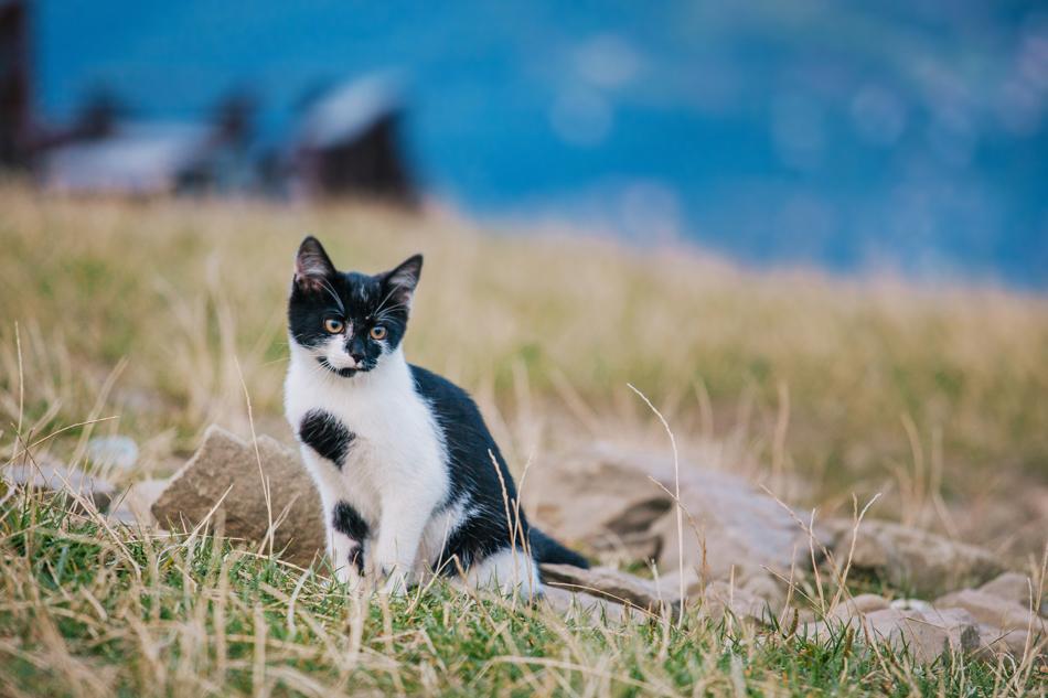 kotem siedzi na trawie i patrzy przed siebie