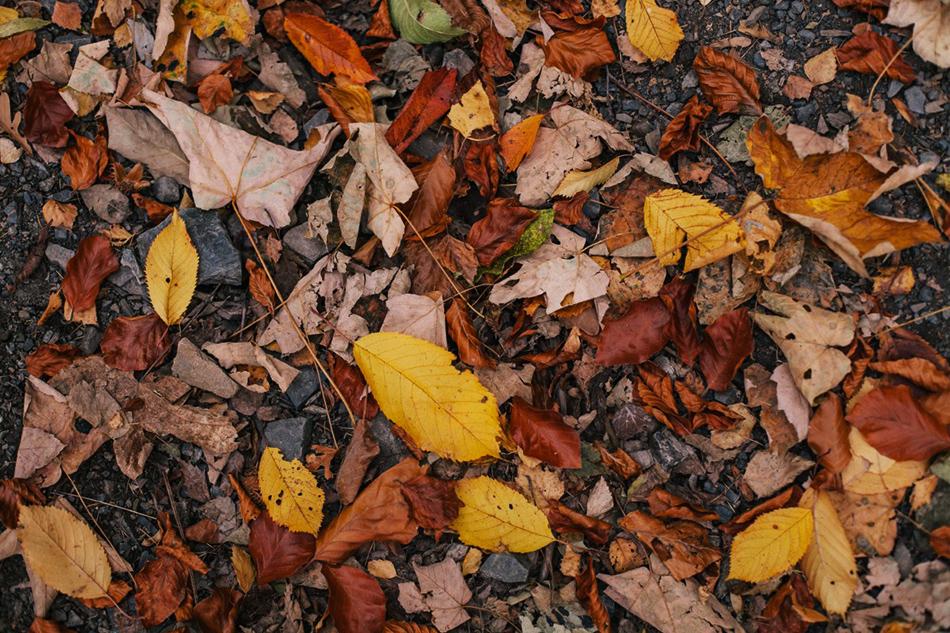 jesienne zółto- czerwone liście są rozrzucone na ziemi